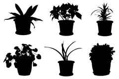 Set of different flowers in pots. Isolated on white background Stock Image