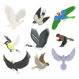 Set of different flying birds vector illustration. Royalty Free Stock Photos