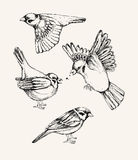 Set with different flying and sitting sparrow. Hand drawn vector illustration. Royalty Free Stock Photos