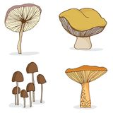 Set of different forest mushrooms. Royalty Free Stock Photos