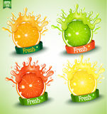 Set of different fresh Stock Image