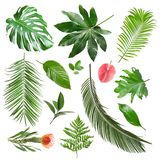 Set of different fresh tropical leaves and flowers. On white background stock images