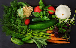 Set of different fresh vegetables carrots, zucchini, cucumber, tomato. Royalty Free Stock Images