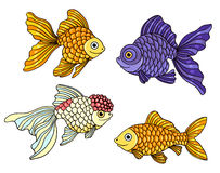 Set of the different goldfishes Stock Image