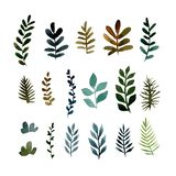 Set of different green branches of plants. Watercolor illustration royalty free illustration