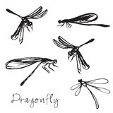 Set of different hand drawn dragonflies. Isolated on white background Royalty Free Stock Photos
