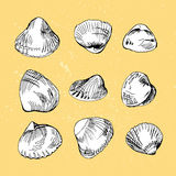 Set of different hand drawn shells Royalty Free Stock Photo