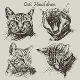 Set with different heads cats Stock Photos