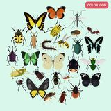 Set of different insects color flat icons set Royalty Free Stock Photo
