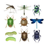 Set of different insects Stock Photography