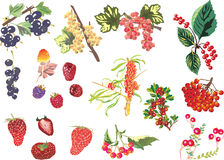 Set of different isolated berries illustration Stock Photos