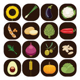 Set of different kinds of vegetables. Stock Photo