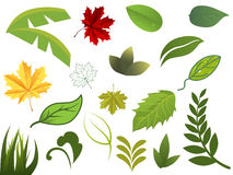 Set of different leafs Royalty Free Stock Photography