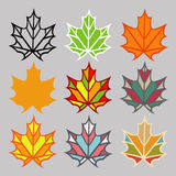 Set of different leaves. Set of different colored maple leaves Stock Image