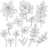 Set of different leaves. Hand drawn set of different leaves. Black and white floral elements for coloring. Vector sketch Royalty Free Stock Image