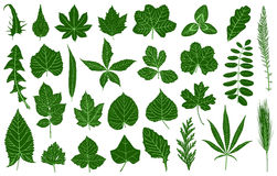 Set of different leaves Royalty Free Stock Photography