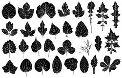 Set of different leaves. Isolated on white Stock Photography