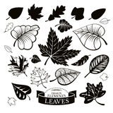 Set of different leaves Royalty Free Stock Image