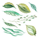 Set of different leaves Stock Photos