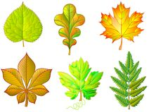 Set of different leaves on white background. Stock Images