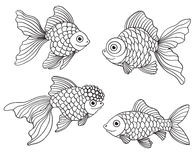 Set of the different linear goldfishes Stock Photo