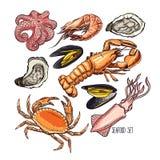 Marine animals or seafood. Set of different marine animals. Hand-drawn illustration Stock Image