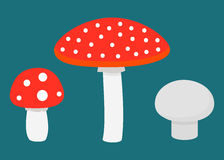 Set of different mushrooms Royalty Free Stock Images