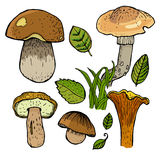 Set of different mushrooms. Stock Photos