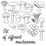 Set of different mushrooms Stock Image
