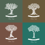 Set of different natural olive oil trees logo Stock Images