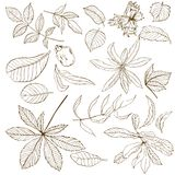 Set of different nuts leaves vector illustration