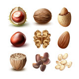 Set of different nuts Royalty Free Stock Image