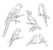 Different parrots in outlines - vector illustration Stock Images