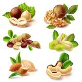 Different nuts realistic vector set Royalty Free Stock Photos