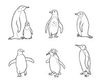Set of different penguins in outlines - vector illustration. Set of different penguins in outlines. Vector illustration. EPS8 Stock Image