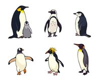 Set of different penguins - vector illustration. Set of different penguins. Vector illustration. EPS8 Stock Images