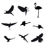 Set of different photographs of birds isolated on Stock Photo