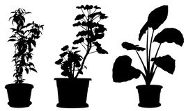 Set of different plants in pots Stock Image