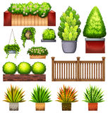 Set of different plants Royalty Free Stock Photo