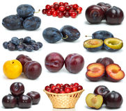 Set of different plums. Isolated on the white background Stock Images
