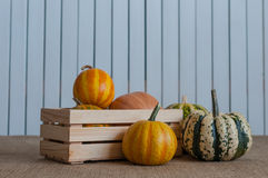 Set of different pumpkins in a wooden crate on Royalty Free Stock Photos