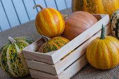 Set of different pumpkins in a wooden crate on Royalty Free Stock Images