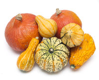 Set of different pumplkins Stock Photography