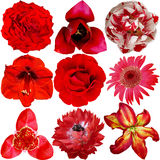 Set of Different Red Flowers Stock Image