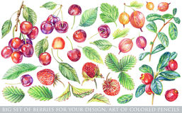 Set of different red, yellow berries and green leaves for design Royalty Free Stock Photo