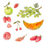 Set of different russian fruits drawn with watercolor paint. Ill Stock Images