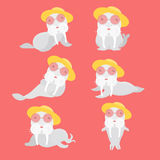Set of different sea lions. Set of different sea lions on red background Royalty Free Illustration