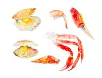 Set of different seafood. Trout, shrimp, scallops, king crab claws. Watercolor illustration isolated on white background royalty free illustration