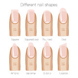 Set of different shapes of nails Royalty Free Stock Photos