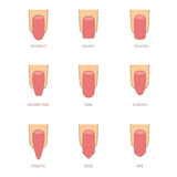 Set of different shapes of nails on white. Nail shape icons.  Royalty Free Stock Photo